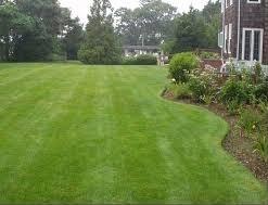 Lawn-yard-2-256x197